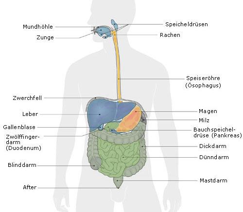 abnehmen darmbakterien
