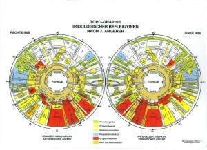 iridologischer-reflexzonen